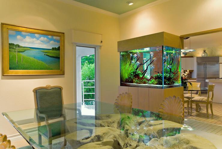Acuatica acuarios ornamentales acuarios en hermosillo for Acuarios ornamentales