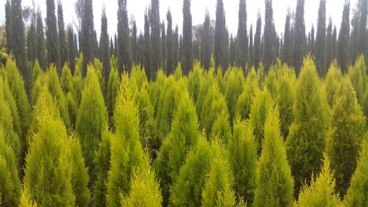 Jardineria viveros jardineros en xochimilco tel fono y for Jardineros en xochimilco