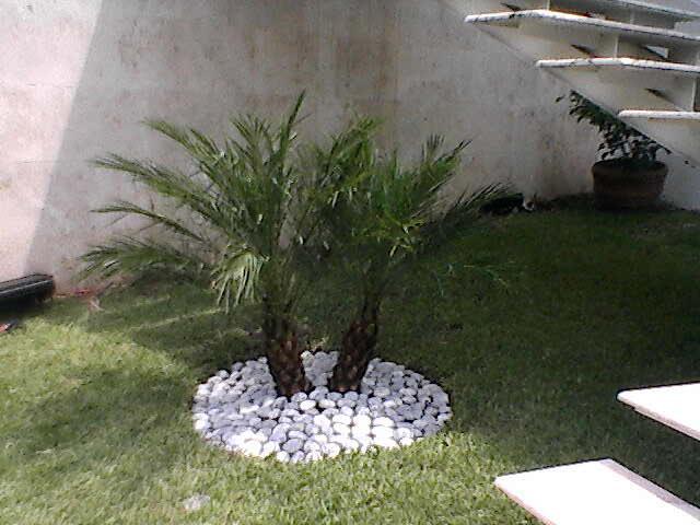 Loley agrojardines plantas de temporada en monterrey for Viveros de plantas de ornato