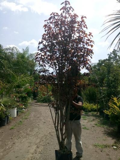 Vivero la flor de morelos productores de todo tipo de for Viveros de plantas de ornato