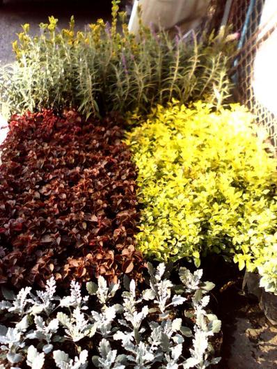 Jardineria la encantada en xochimilco tel fono y m s info Jardineria xochimilco