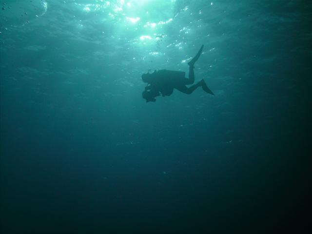 El Mar Azul Equipo De Buceo En Miguel Hidalgo Tel 233 Fono Y
