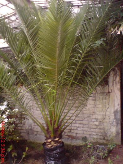 Viveros sandoval en xochimilco tel fono y m s info for Jardineros en xochimilco