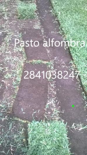 Pasto alfombra en rollo o carpeta en angel r cabada tel fono y m s info - Alfombra en rollo ...