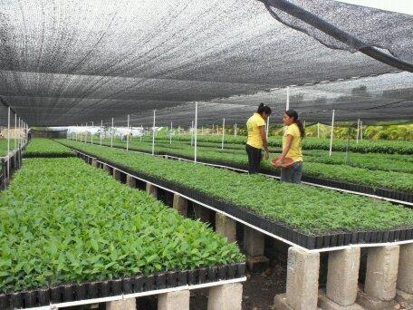 Vivero naturum sc de rl de cv en venustiano carranza for Viveros de plantas de ornato