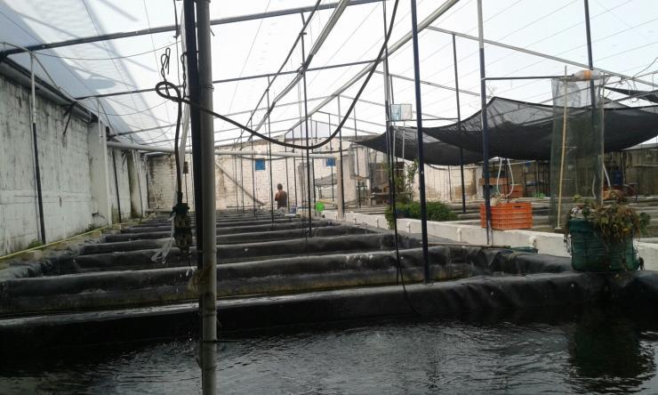 Criadero de peces acatlan en acatlan de juarez tel fono y for Criadero de peces de colores
