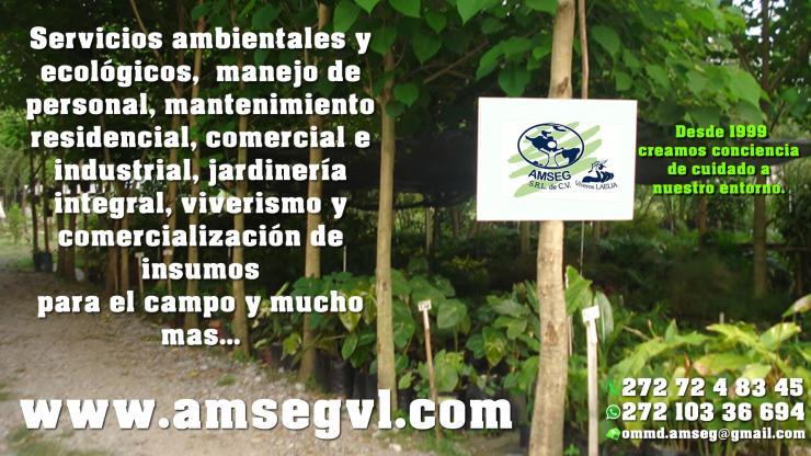 Amseg viveros laelia en ixtaczoquitlan tel fono y m s info for Insumos para viveros