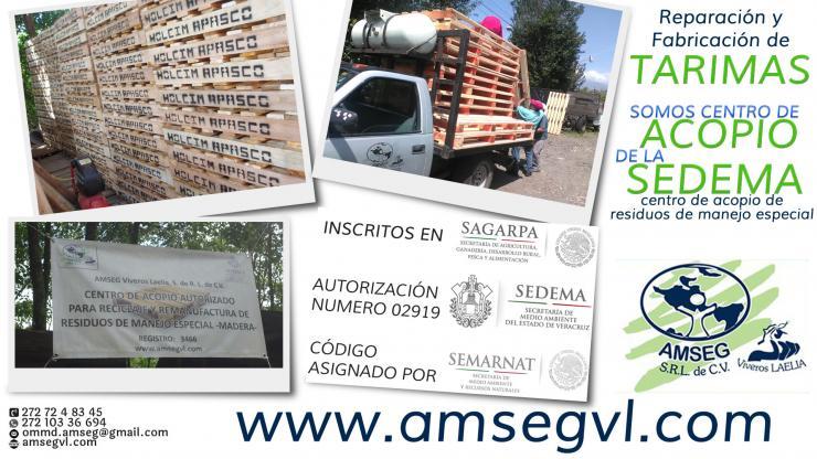Amseg Viveros Laelia En Ixtaczoquitlan Tel Fono Y M S Info