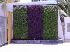 Yamamoto viveros venta de plantas en acapulco tel fono y for Viveros de plantas de ornato