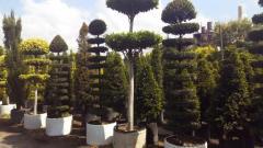 Jardineria viveros jardineros en xochimilco tel fono y for Viveros en paraguay